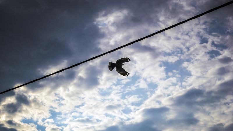 Libertate si stat – Eseu la filosofie