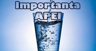 importanta apei pentru organism